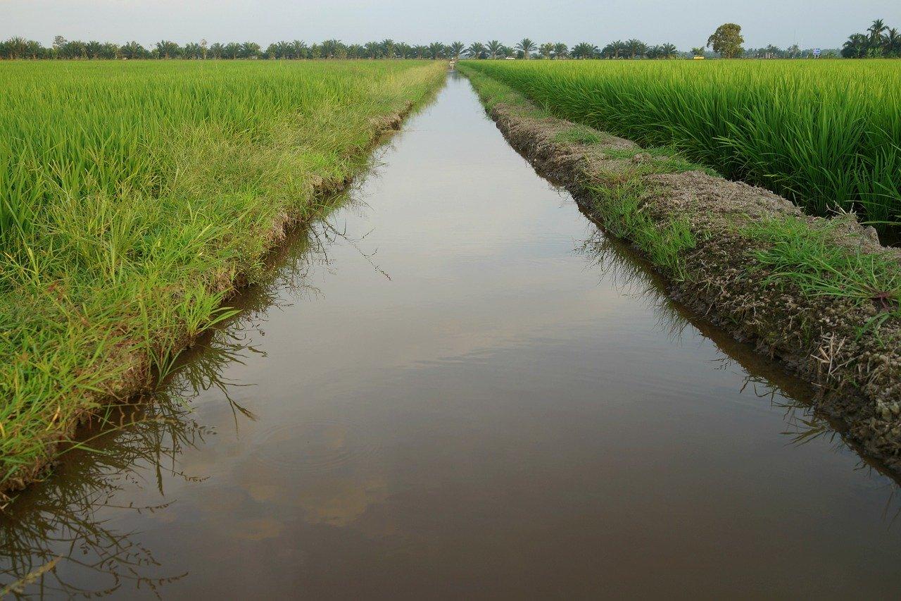 Water in a ditch in a field