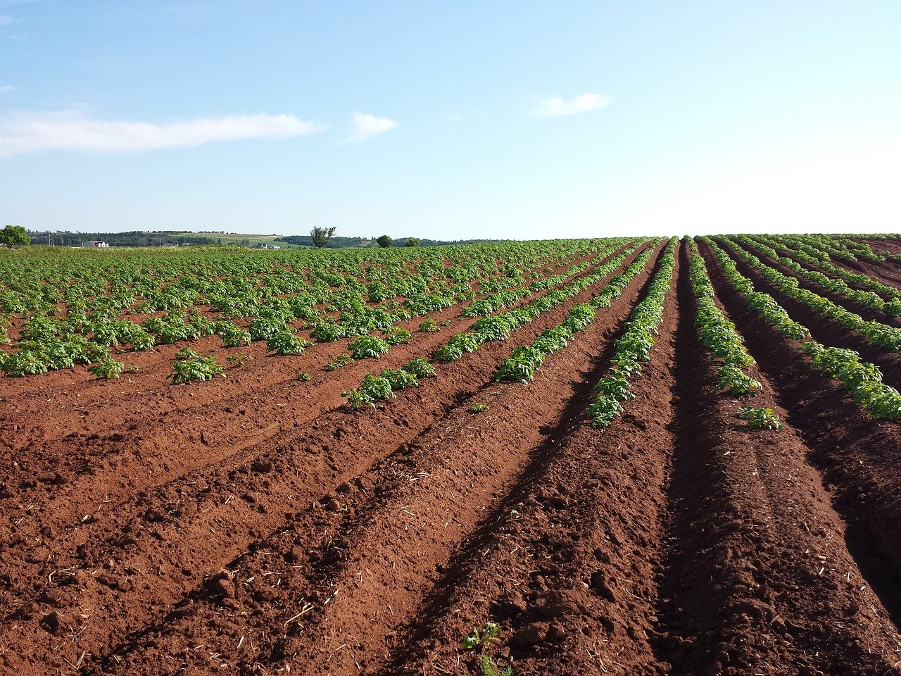 What is Subsurface Drip Irrigation