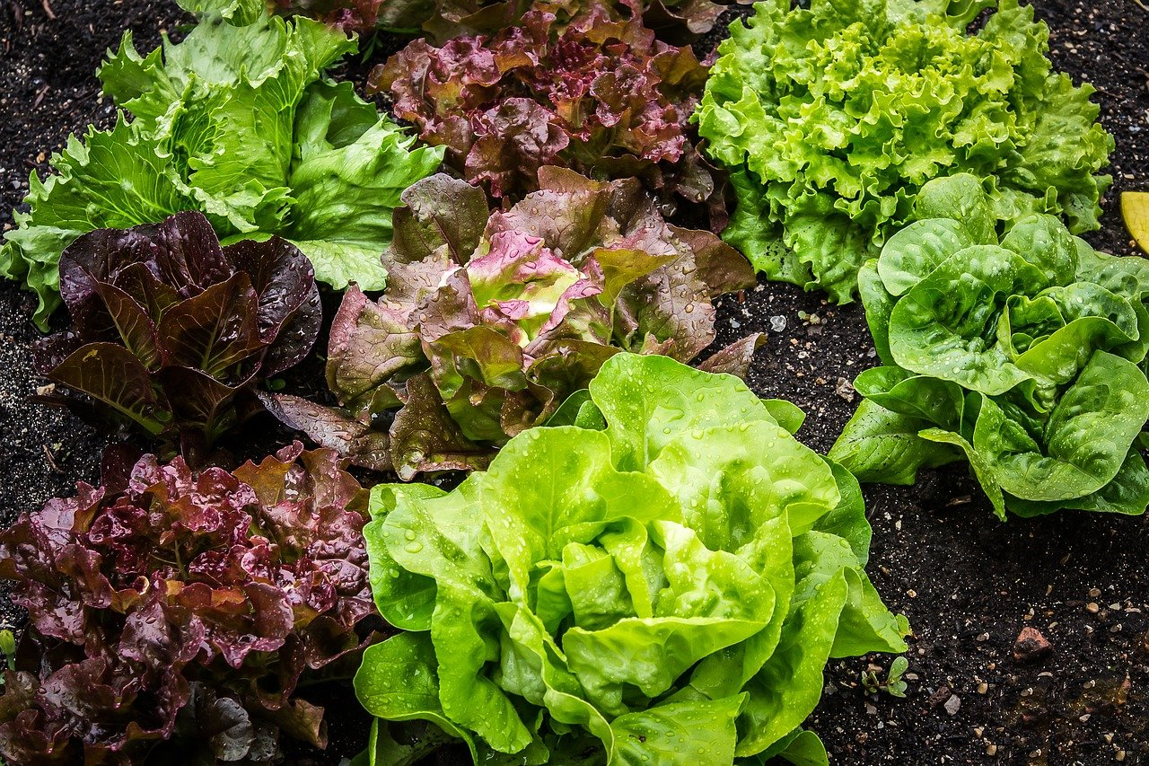 How to Water a Vegetable Garden